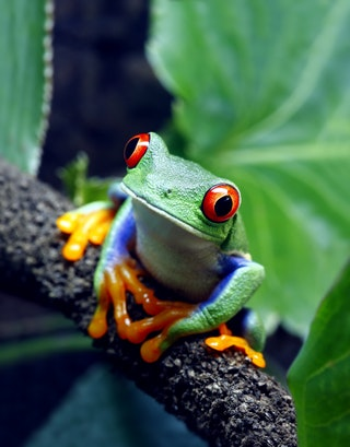Treefrog.jpg?w=320&h=400&dpr=0